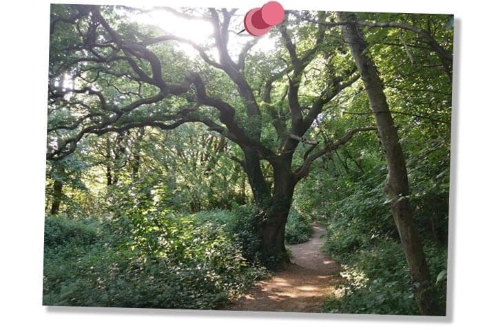 Cardiff, Park, Nature